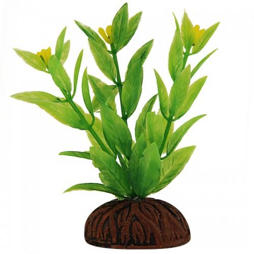 Каталожная фотосъемка растений