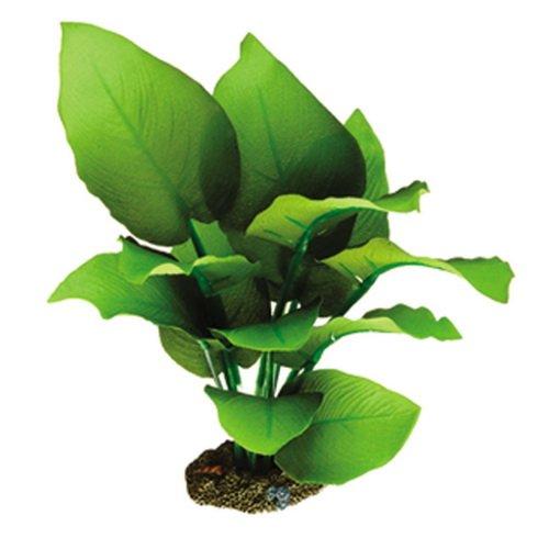 Фотосъемка растений