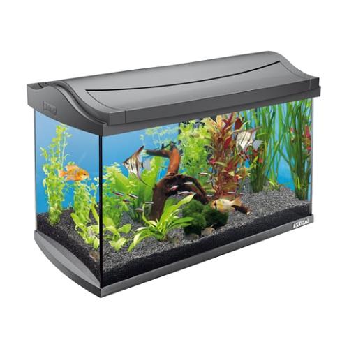 Каталожная фотосъемка аквариумов