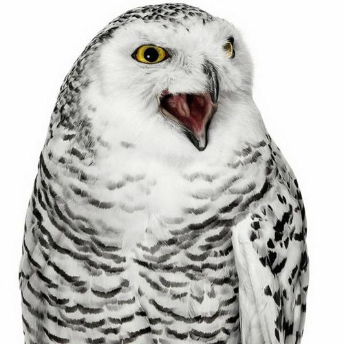 Фотограф для фотосъемки птиц