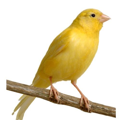 Фотосъемка птиц для каталога