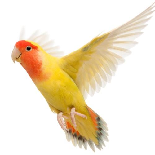Каталожная фотосъемка птиц