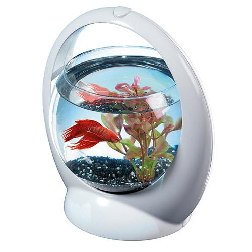 Фотосъемка аквариумов