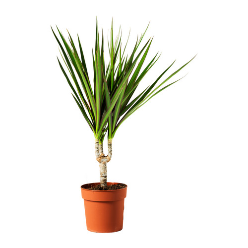 Фотосъемка растений для каталога