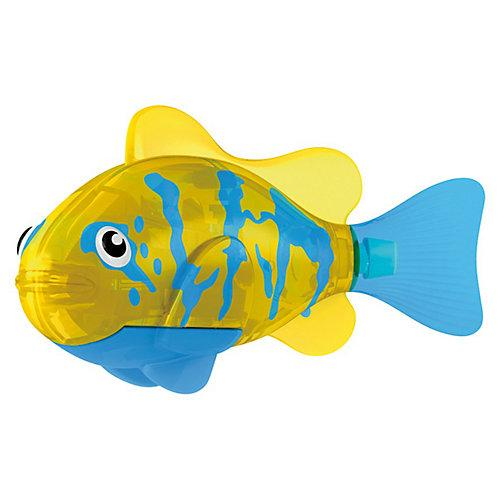 Каталожная фотосъемка аквариумных рыбок